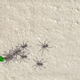 SpiderFighter is a simple game : you have to shoot as many spiders as possible! The more spiders you kill, the faster they get! Developed...